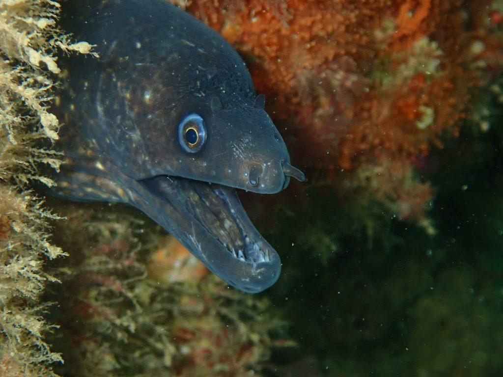 porto de mos diving